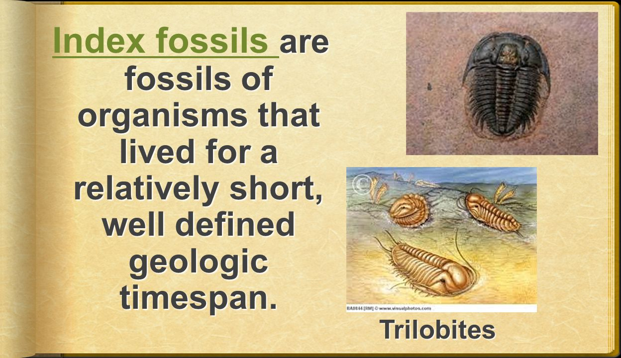 Index fossils are fossils of organisms that lived for a relatively short, well defined geologic timespan.