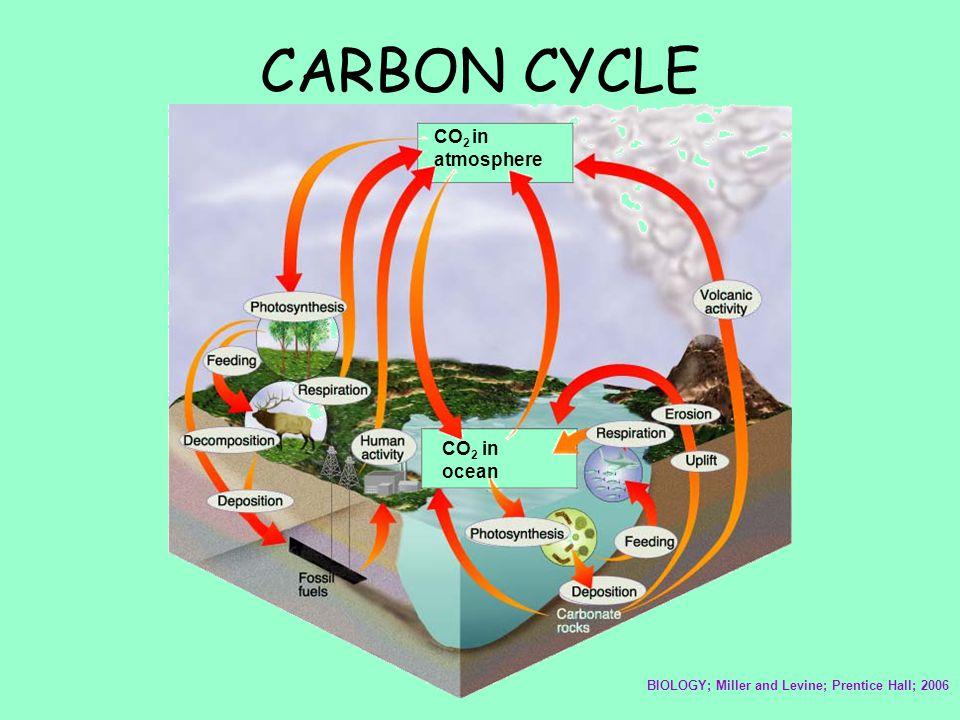 CARBON CYCLE CO2 in atmosphere CO2 in ocean