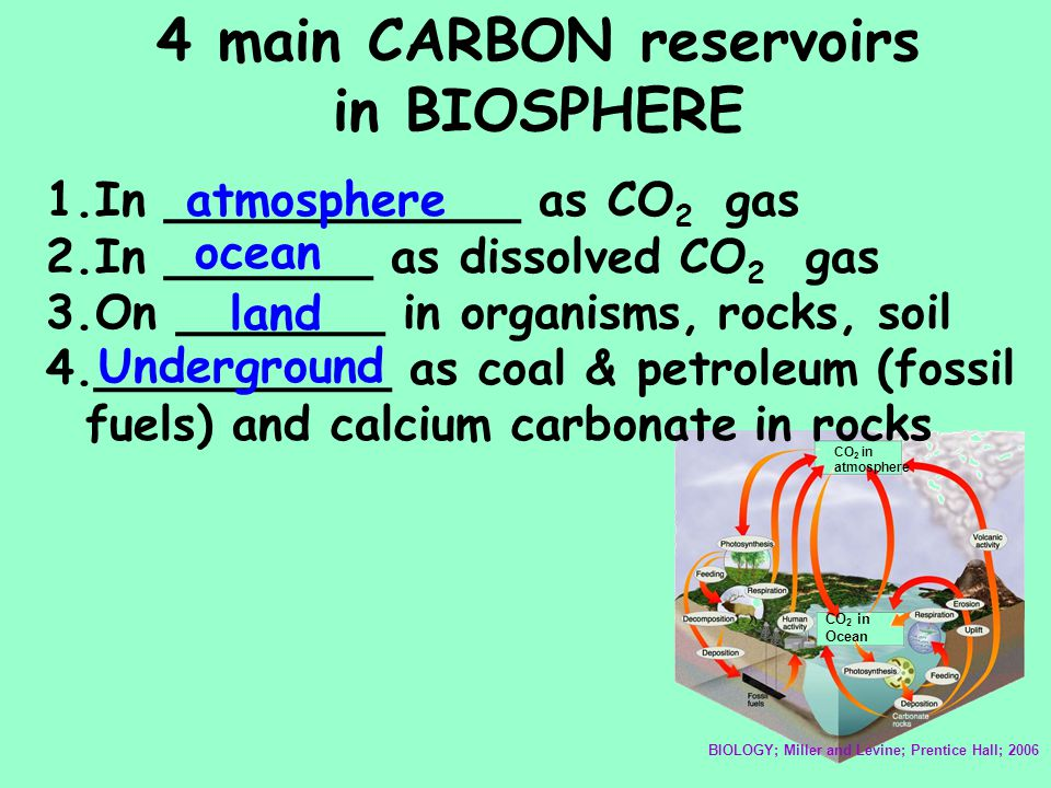 4 main CARBON reservoirs in BIOSPHERE