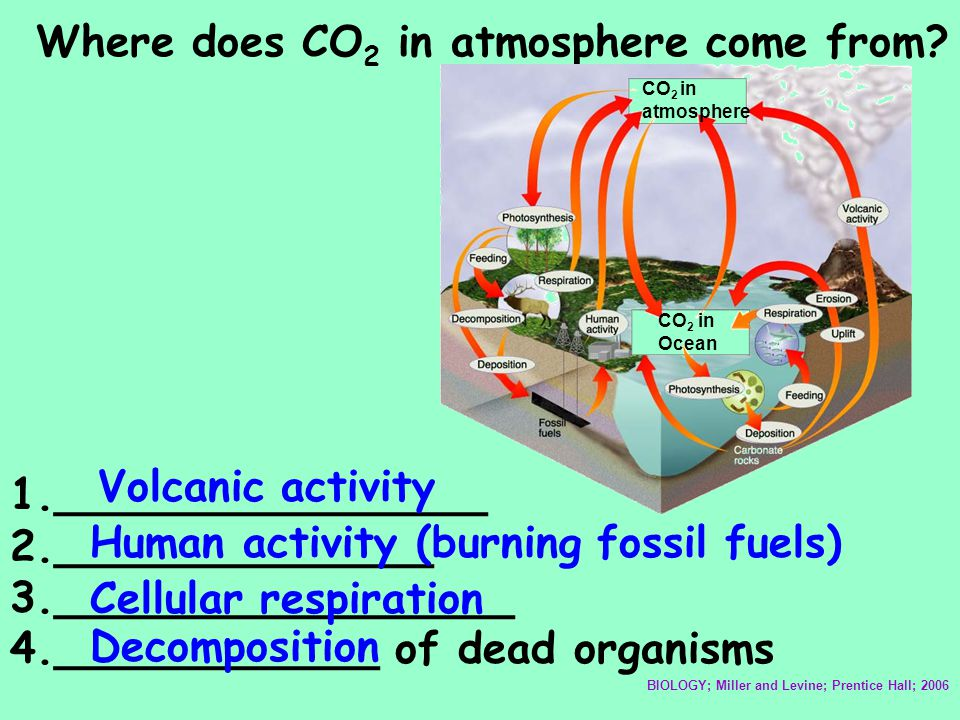Where does CO2 in atmosphere come from