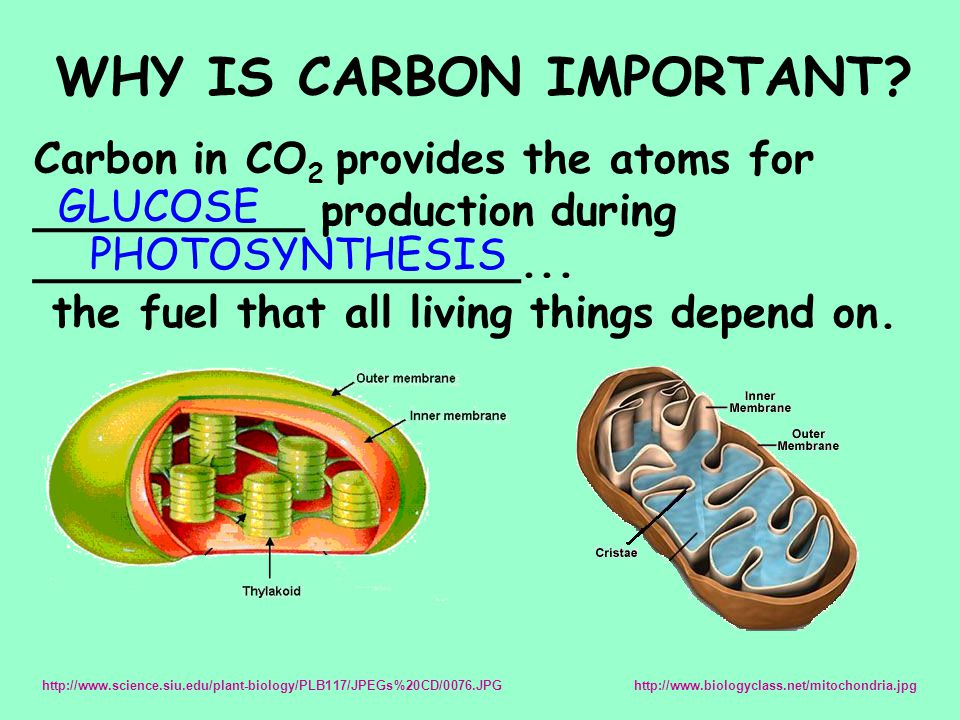WHY IS CARBON IMPORTANT