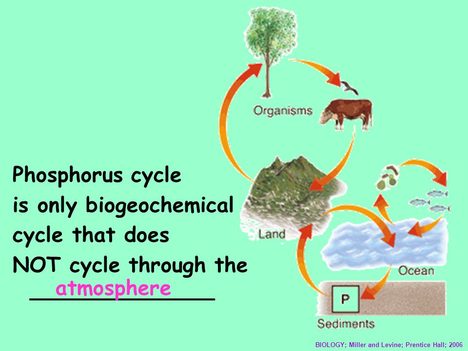 is only biogeochemical cycle that does