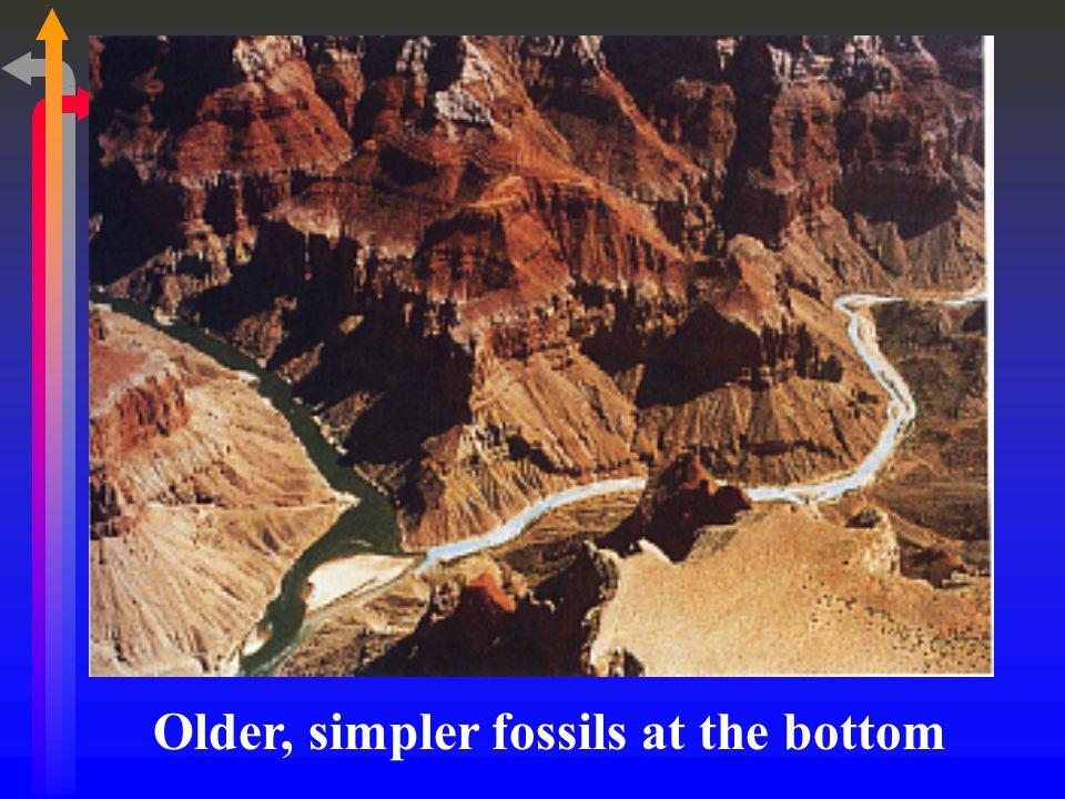 Older, simpler fossils at the bottom