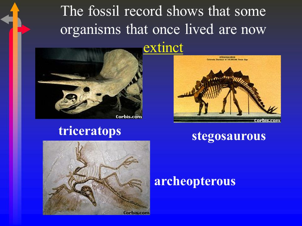 The fossil record shows that some organisms that once lived are now extinct
