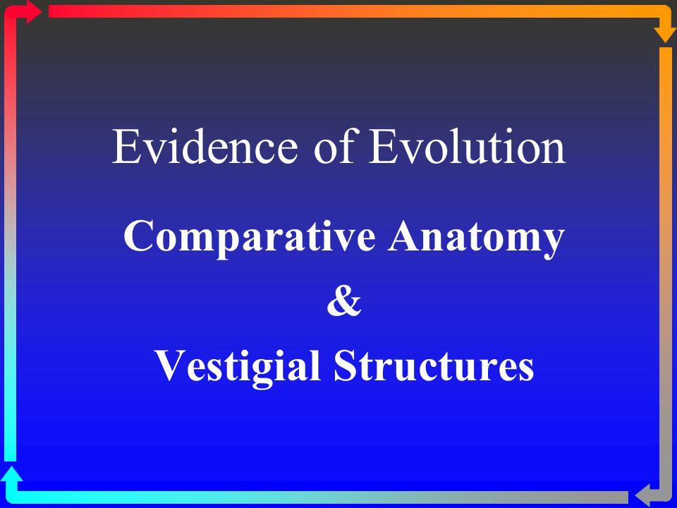 Comparative Anatomy & Vestigial Structures