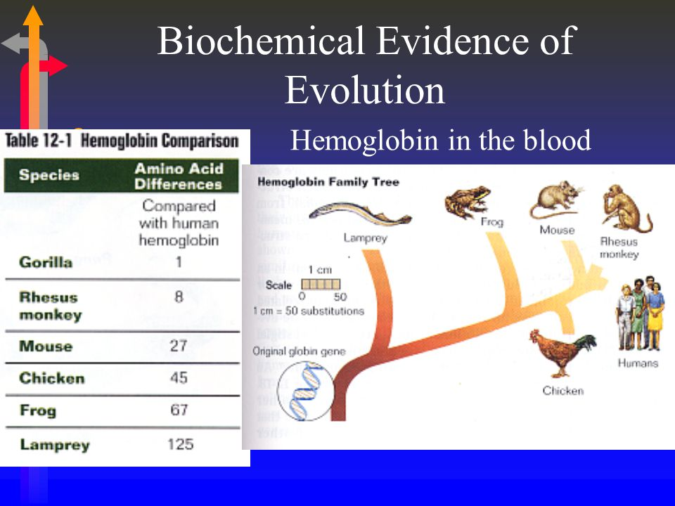 Biochemical Evidence of Evolution