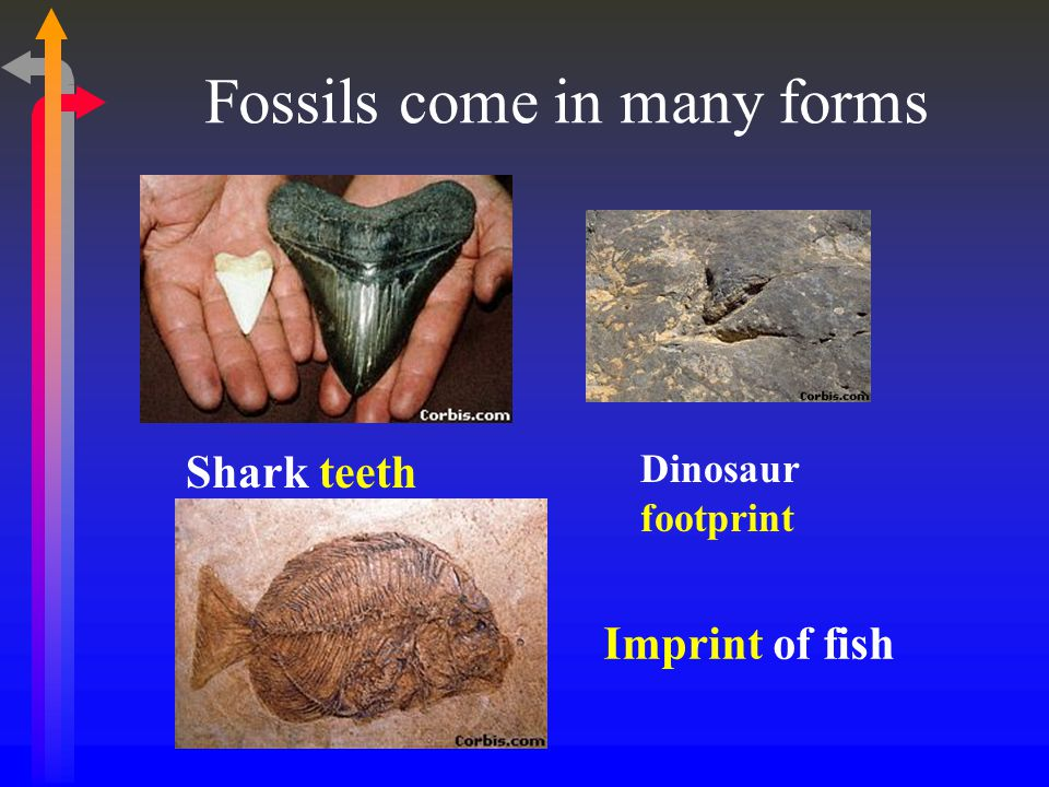 Fossils come in many forms