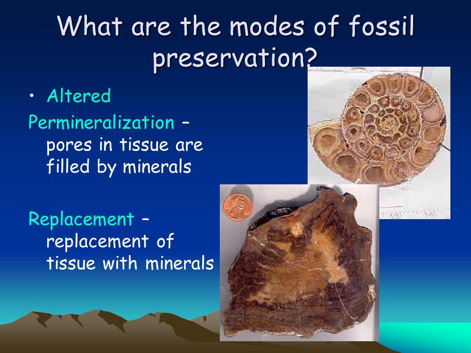 What are the modes of fossil preservation