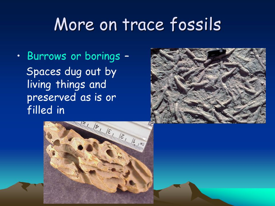 More on trace fossils Burrows or borings –