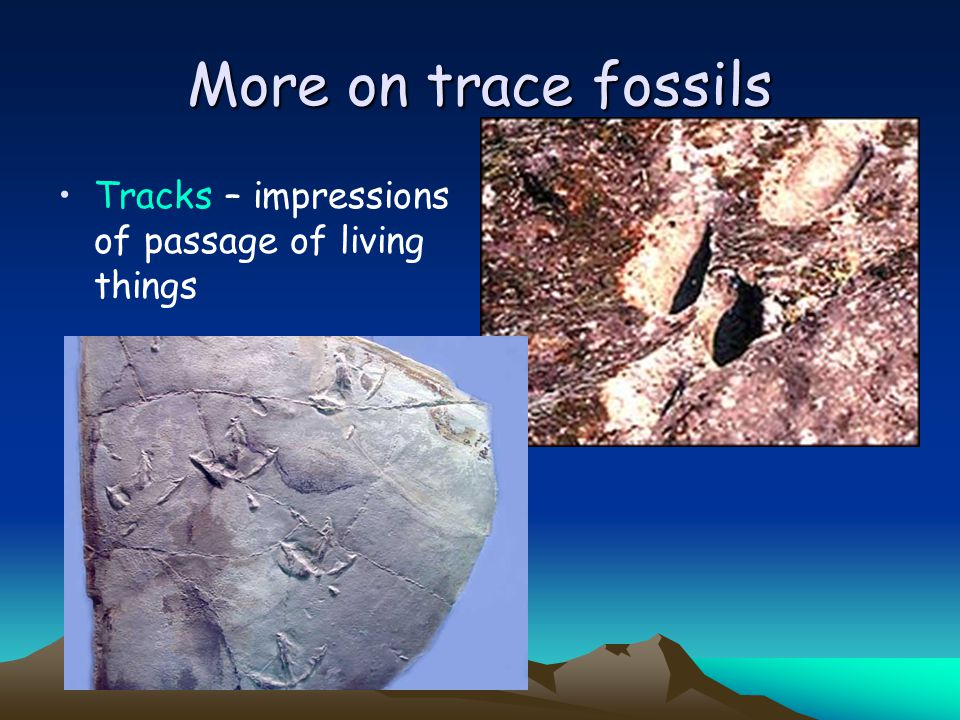 More on trace fossils Tracks – impressions of passage of living things