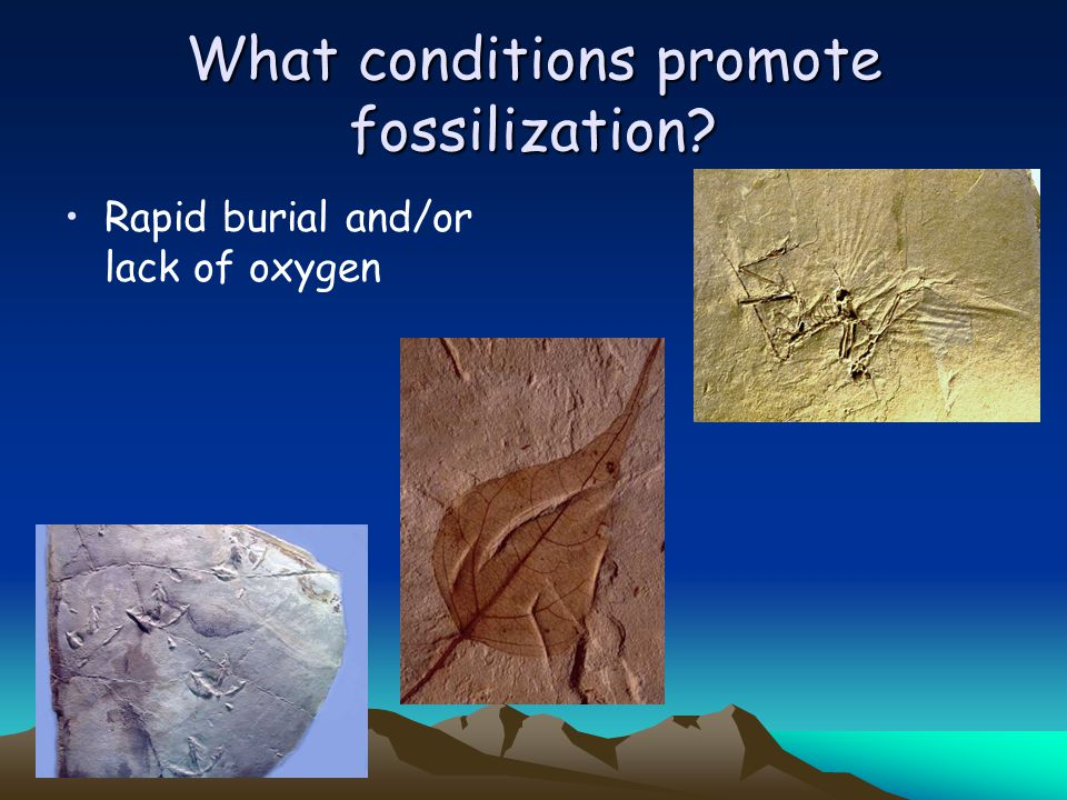 What conditions promote fossilization