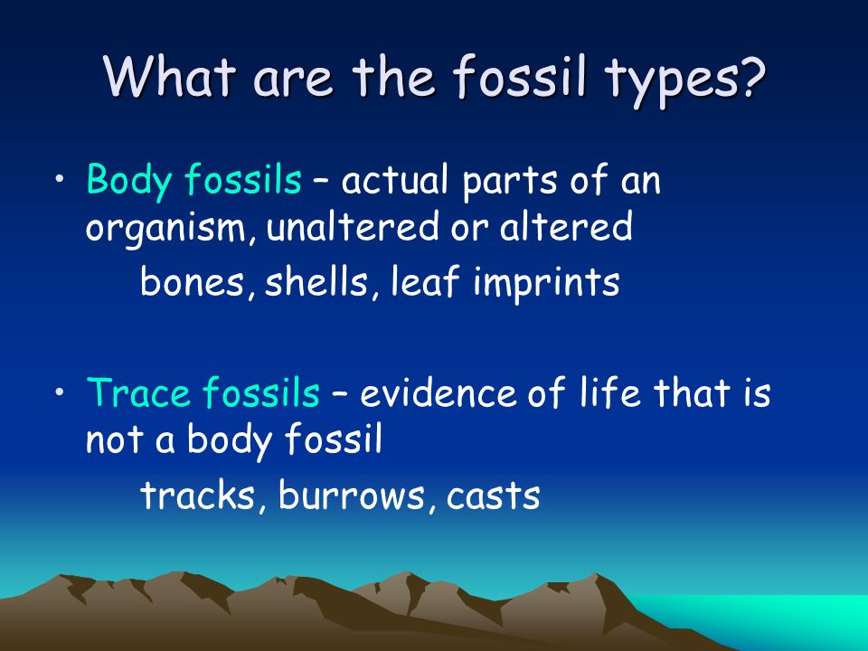 What are the fossil types