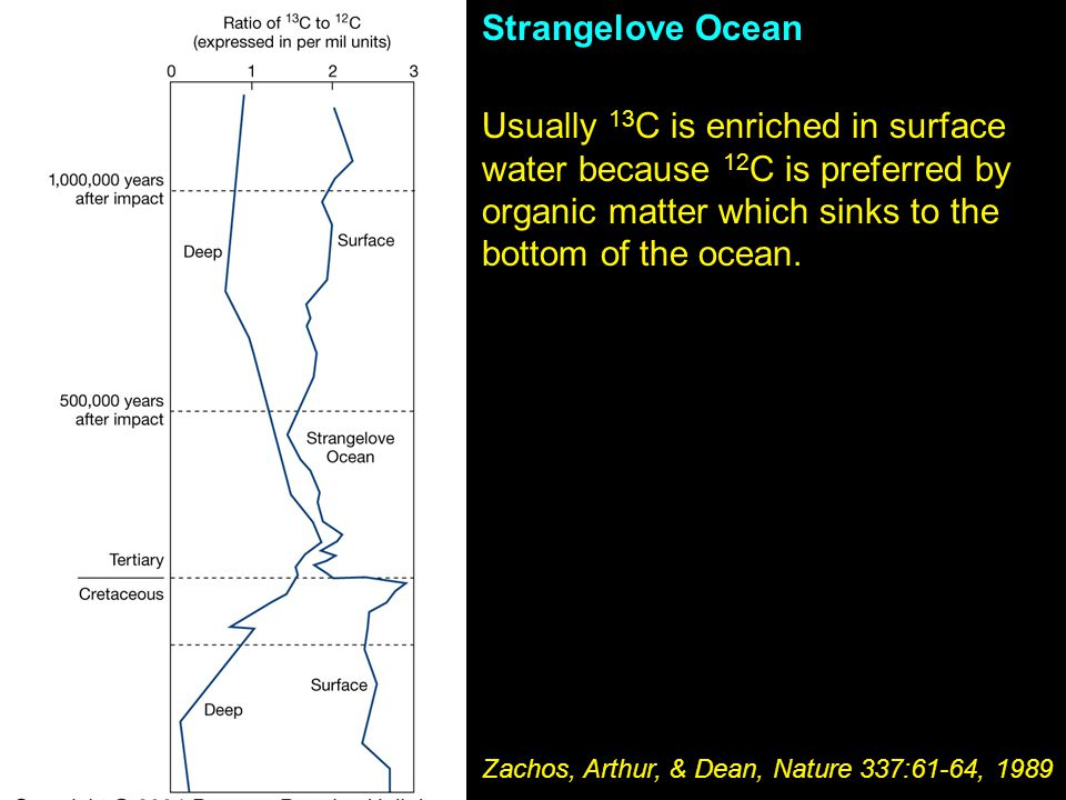Strangelove Ocean Usually 13C is enriched in surface water because 12C is preferred by organic matter which sinks to the bottom of the ocean.
