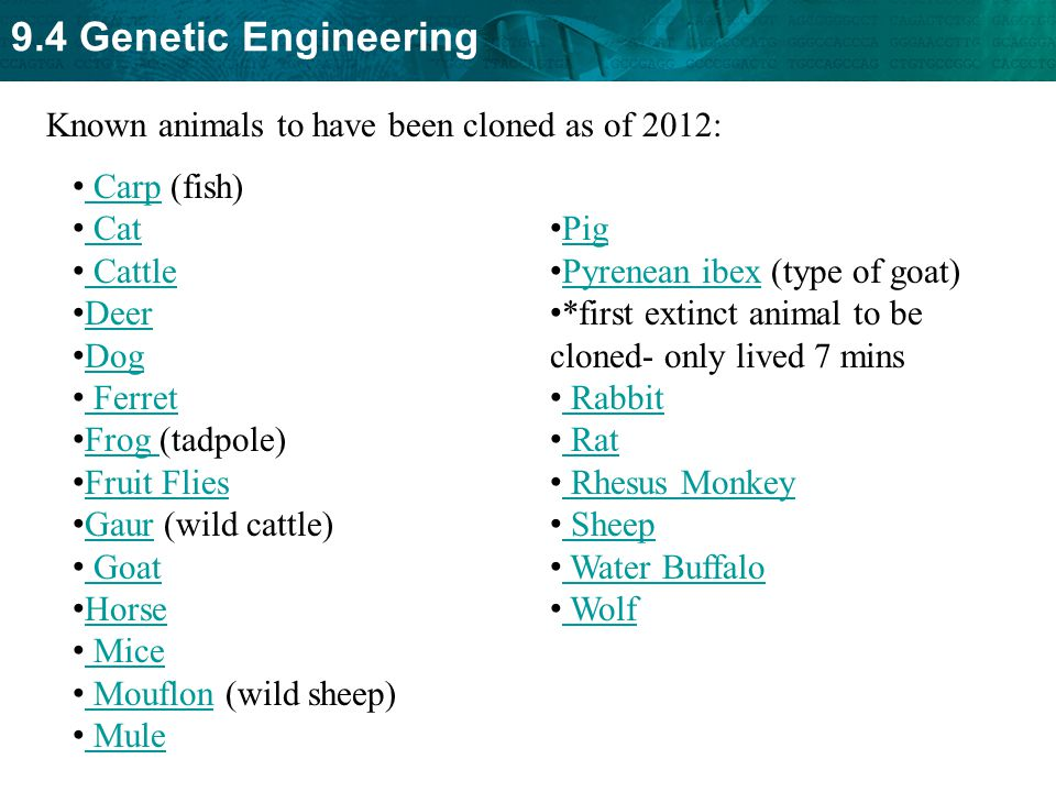 Known animals to have been cloned as of 2012: