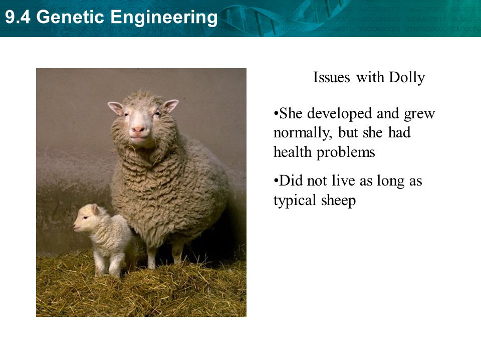 Issues with Dolly She developed and grew normally, but she had health problems.