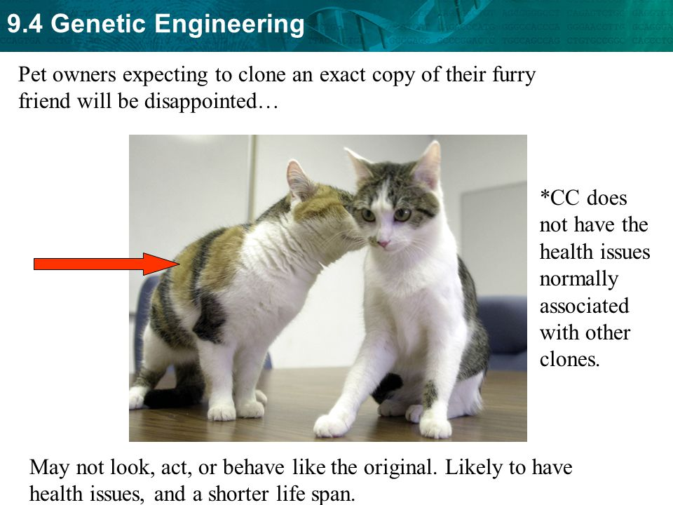 Pet owners expecting to clone an exact copy of their furry friend will be disappointed…