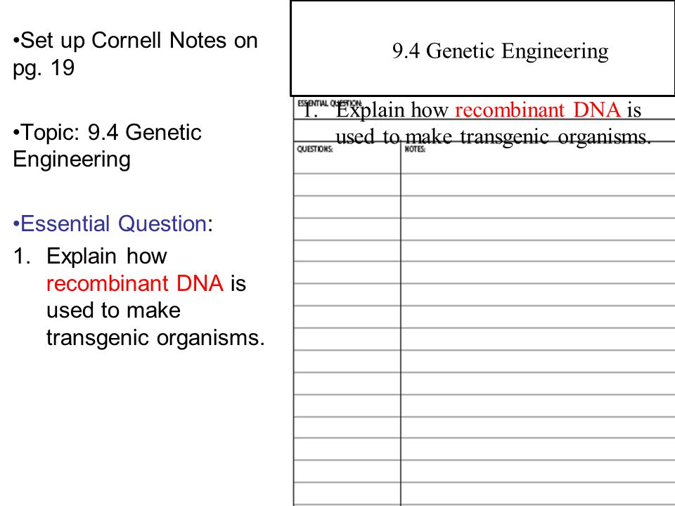 Set up Cornell Notes on pg. 19