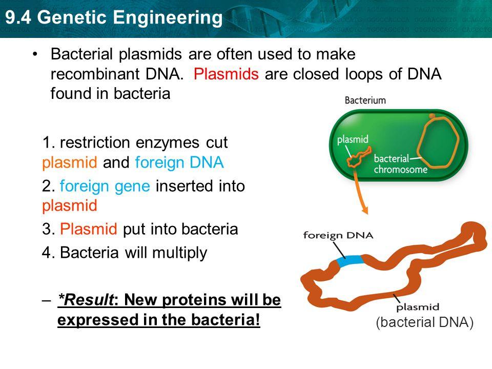 1. restriction enzymes cut plasmid and foreign DNA