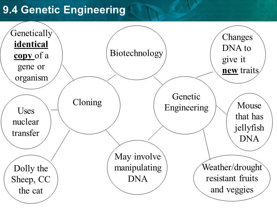 Genetically identical copy of a gene or organism