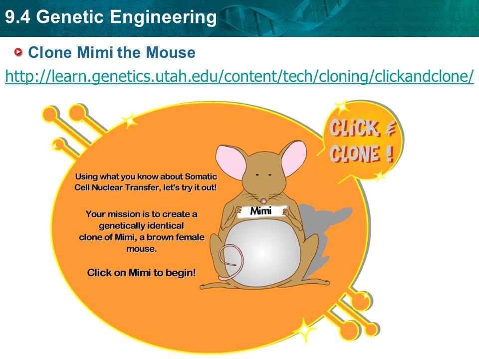 Clone Mimi the Mouse http://learn.genetics.utah.edu/content/tech/cloning/clickandclone/