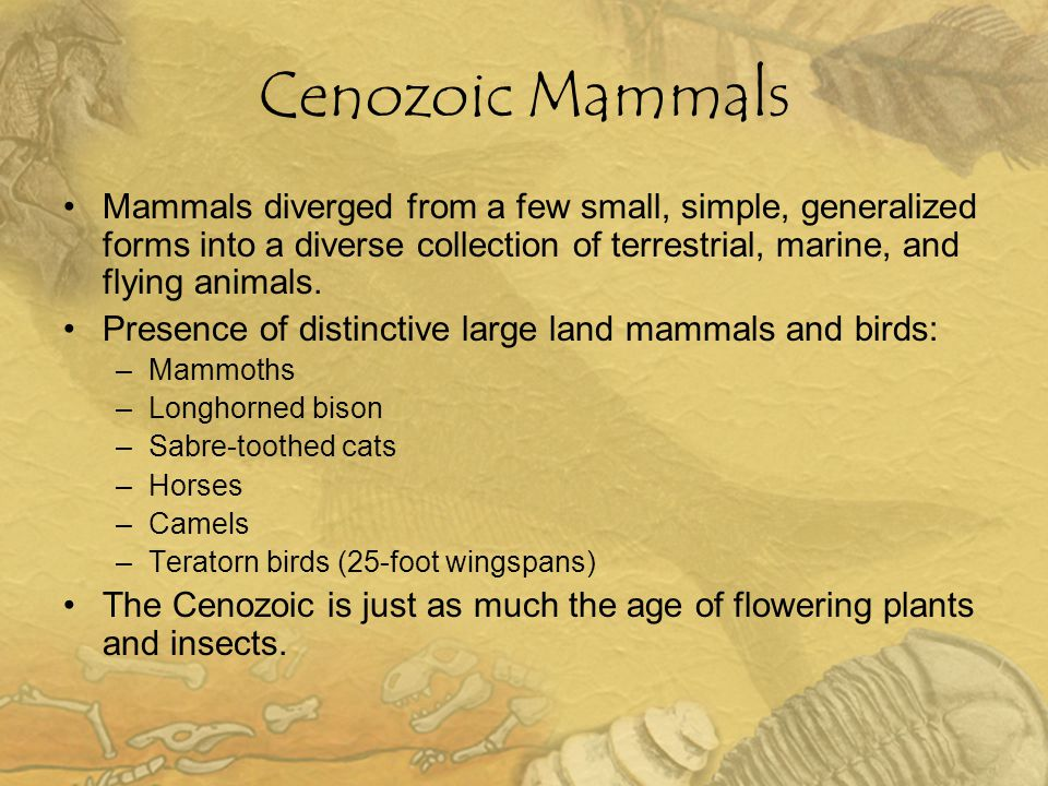 Cenozoic Mammals Mammals diverged from a few small, simple, generalized forms into a diverse collection of terrestrial, marine, and flying animals.