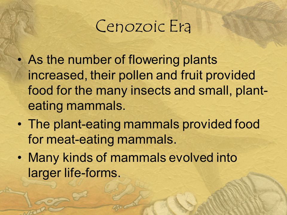 Cenozoic Era As the number of flowering plants increased, their pollen and fruit provided food for the many insects and small, plant-eating mammals.