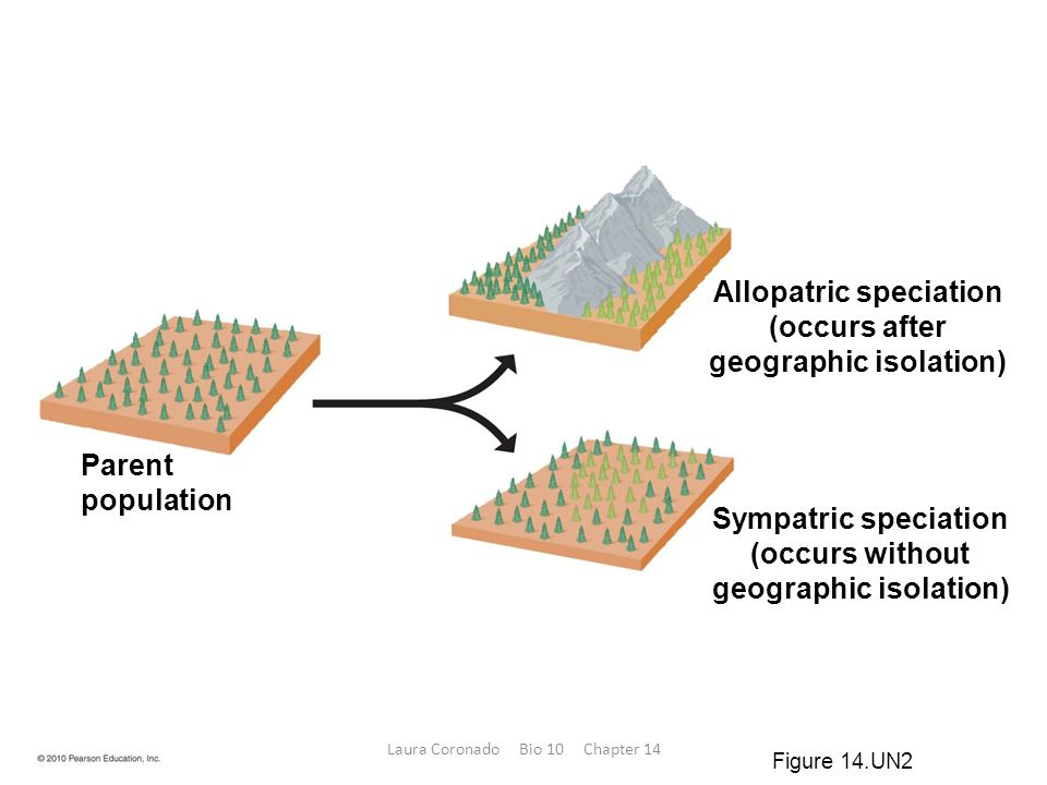 Allopatric speciation geographic isolation) geographic isolation)