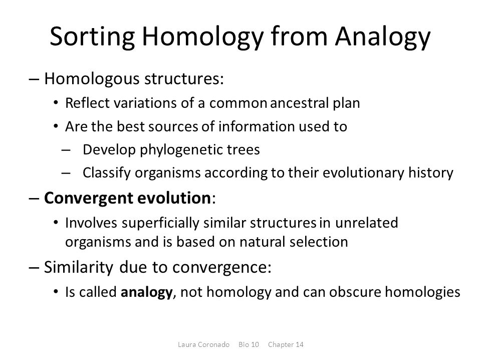 Sorting Homology from Analogy