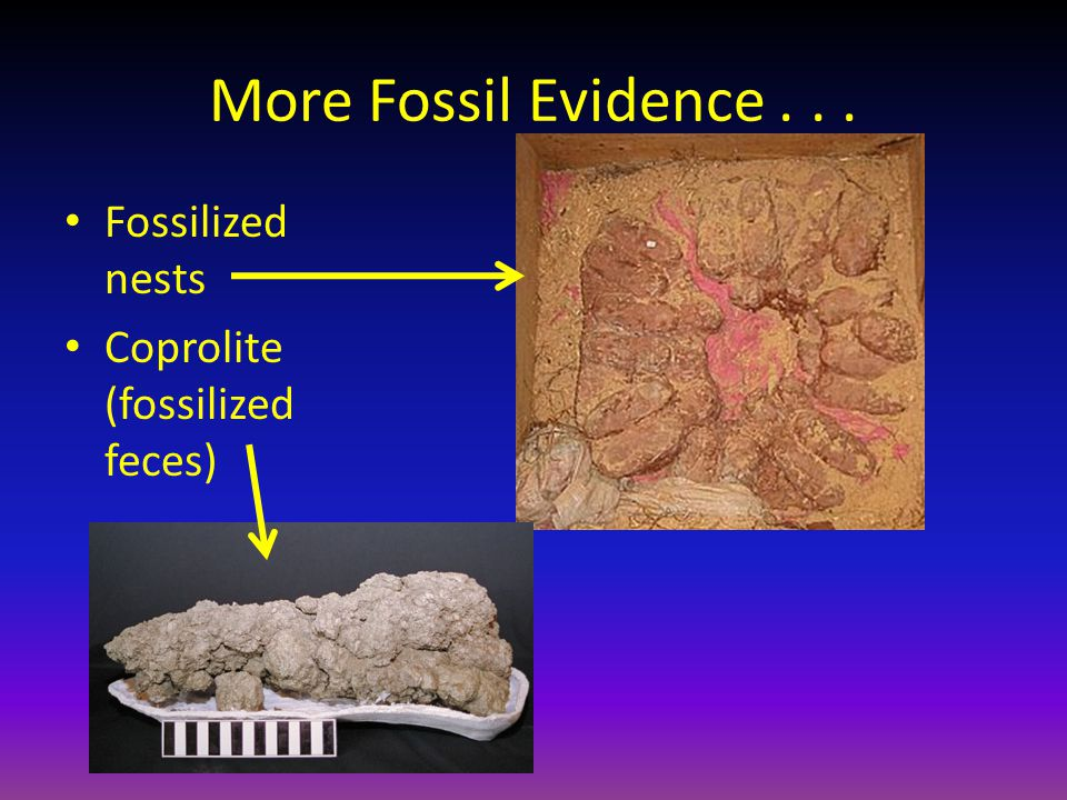 More Fossil Evidence . . . Fossilized nests