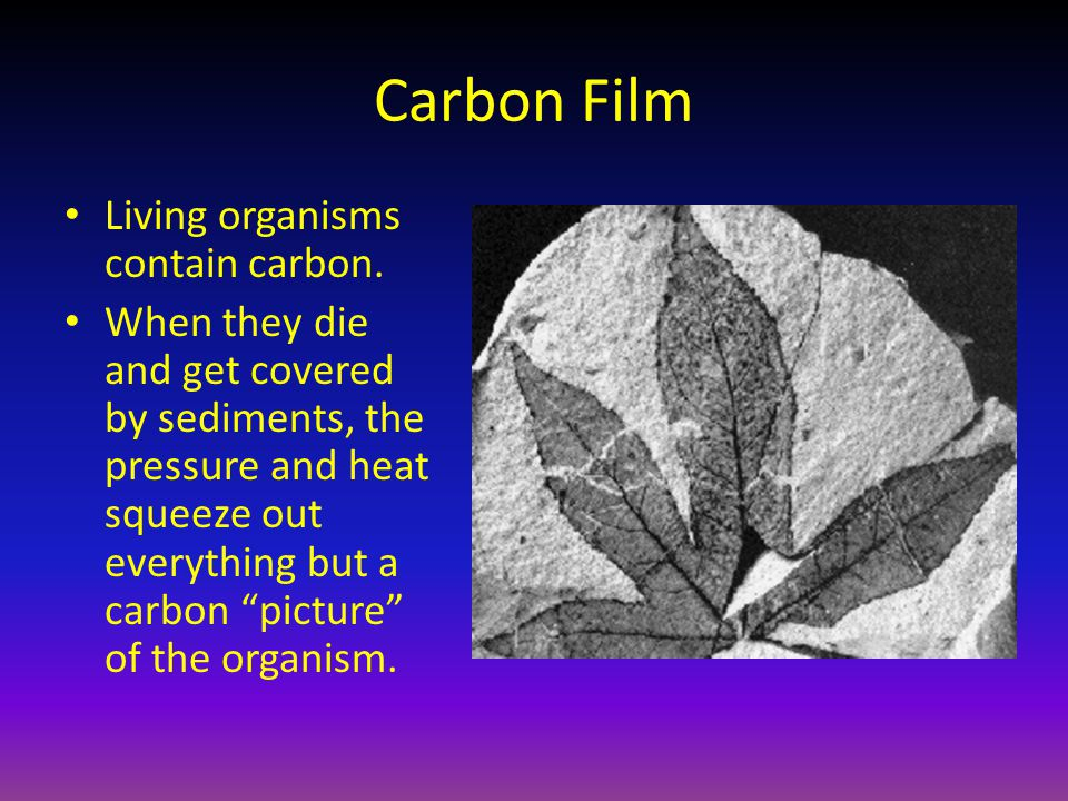 Carbon Film Living organisms contain carbon.
