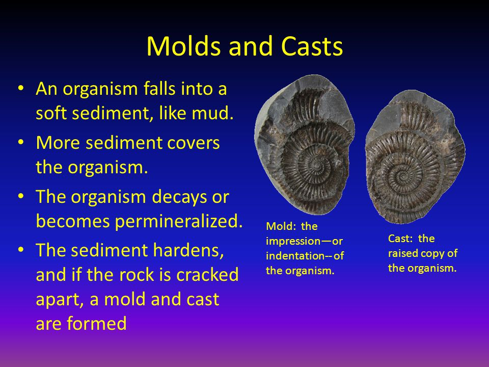 Molds and Casts An organism falls into a soft sediment, like mud.