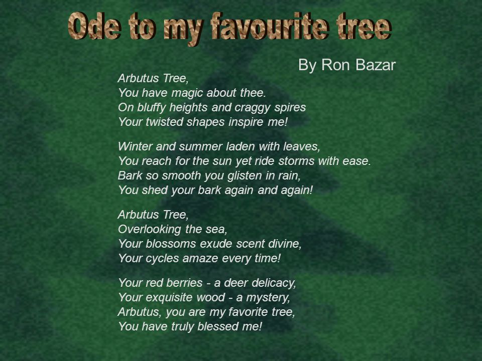 Ode to my favourite tree