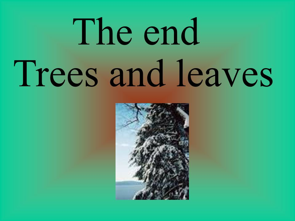 The end Trees and leaves