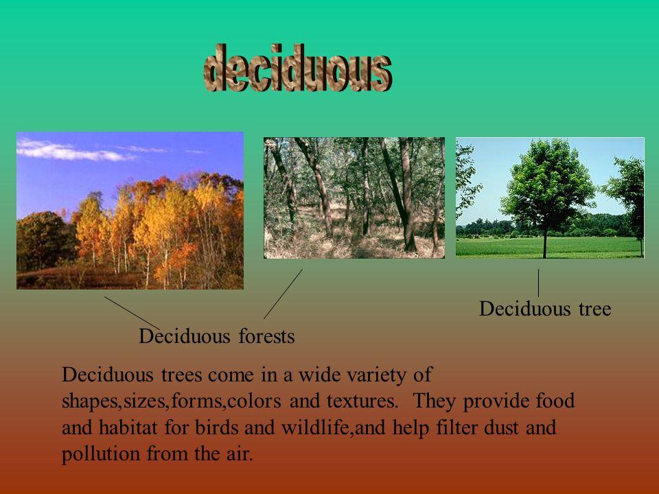 deciduous Deciduous tree Deciduous forests