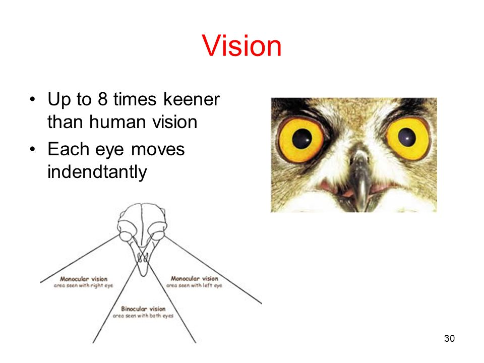 Vision Up to 8 times keener than human vision