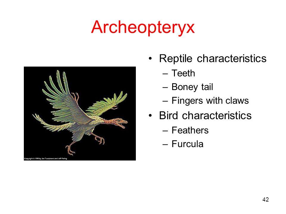Archeopteryx Reptile characteristics Bird characteristics Teeth