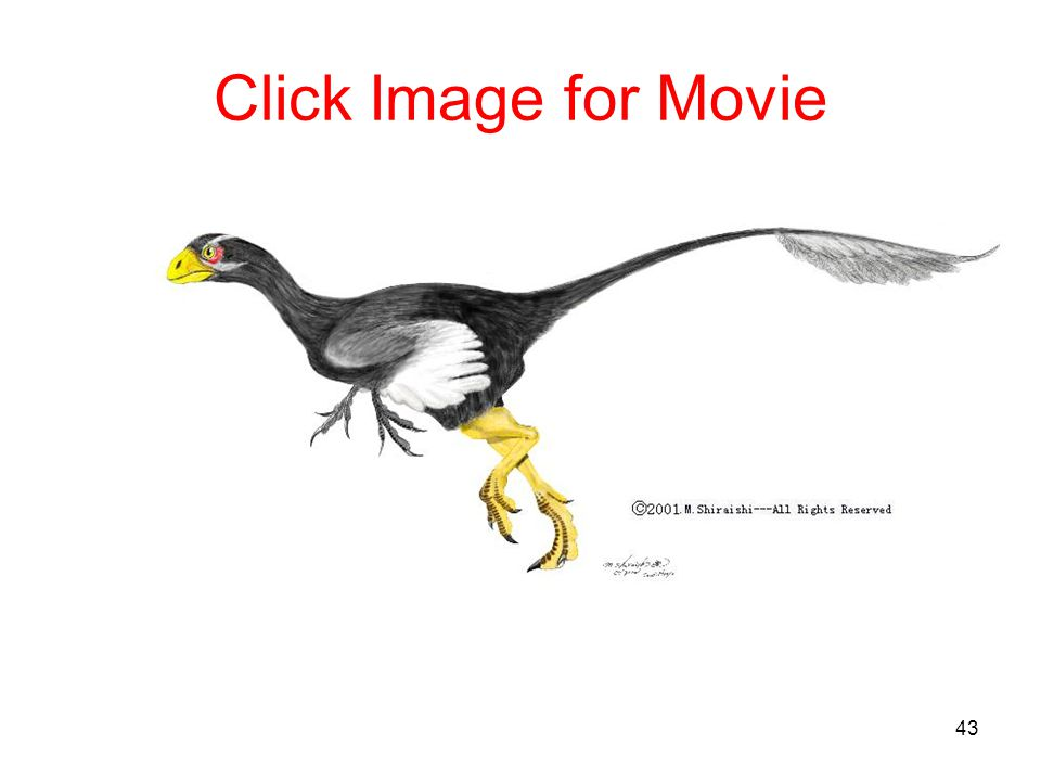 Click Image for Movie