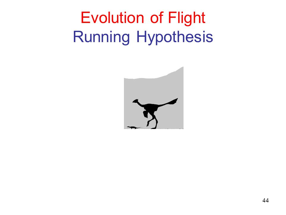 Evolution of Flight Running Hypothesis