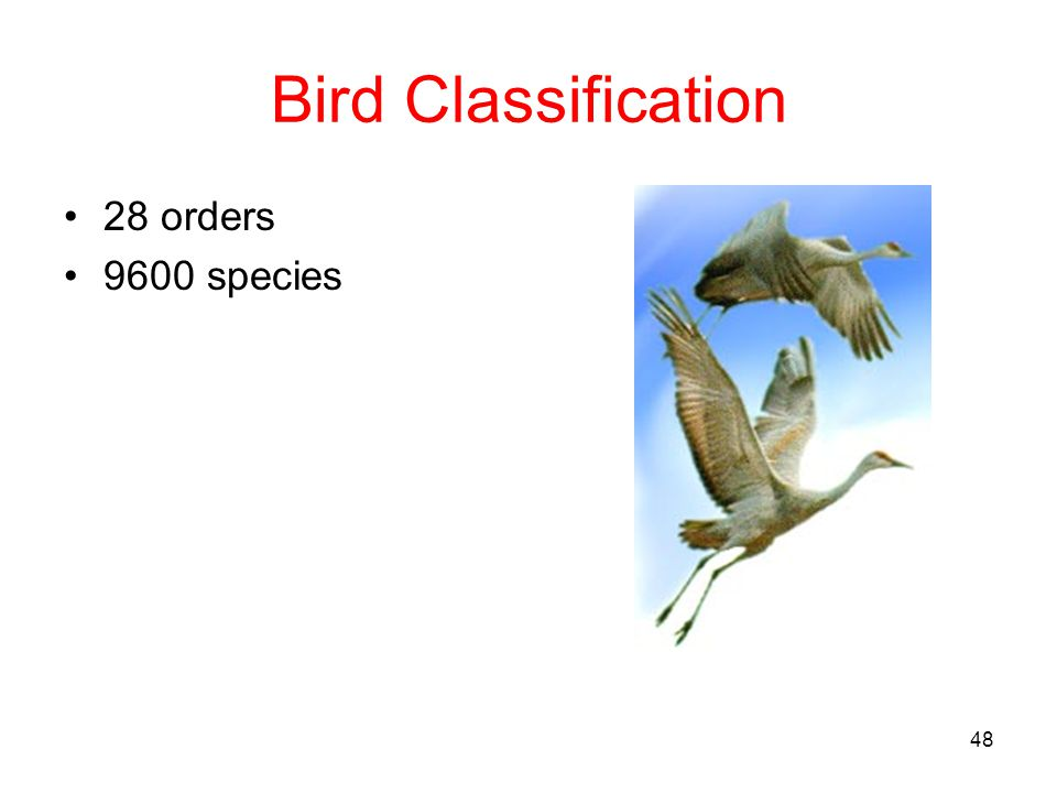 Bird Classification 28 orders 9600 species