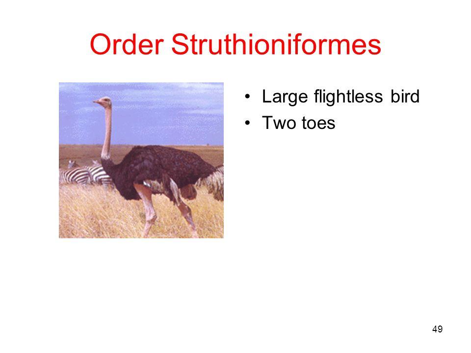 Order Struthioniformes