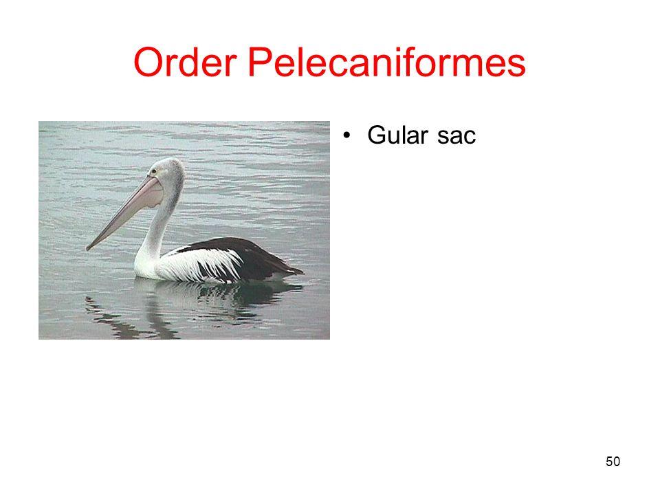Order Pelecaniformes Gular sac