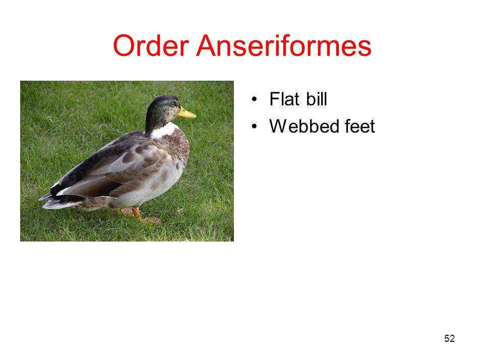 Order Anseriformes Flat bill Webbed feet