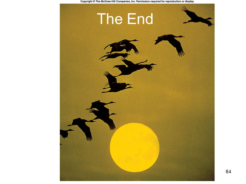 The End Fig. 27.co
