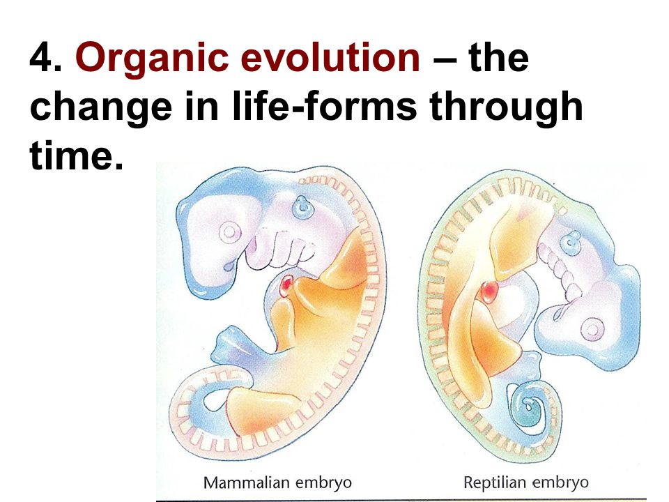 4. Organic evolution – the change in life-forms through time.
