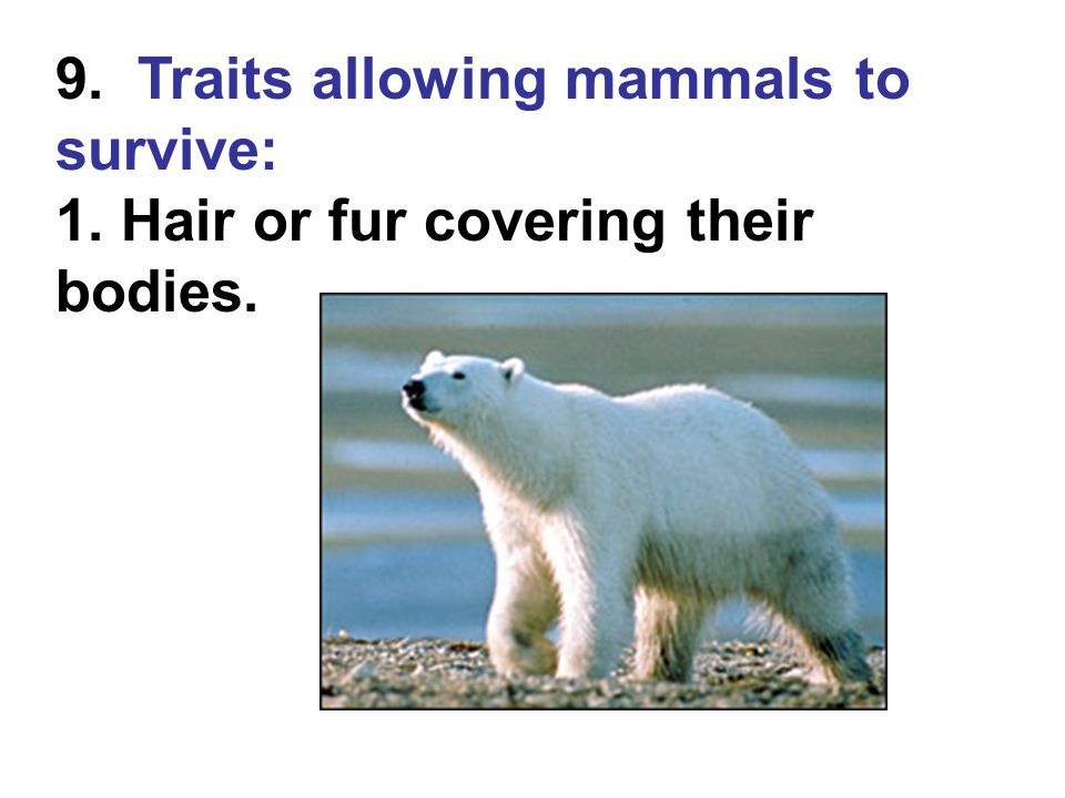 9. Traits allowing mammals to survive: