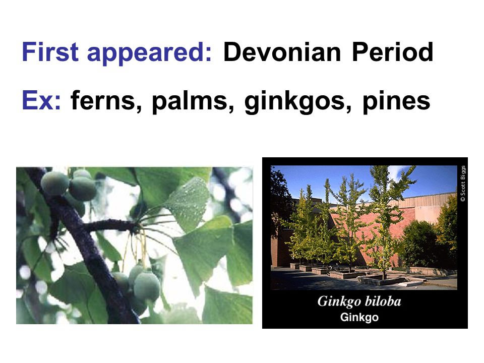 First appeared: Devonian Period