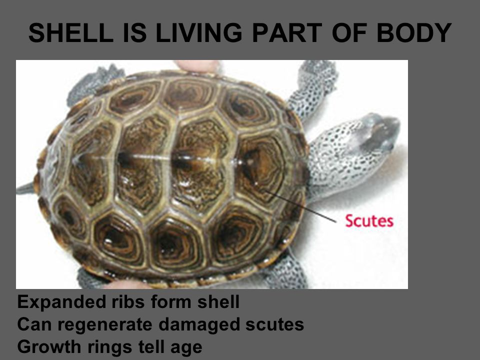 SHELL IS LIVING PART OF BODY