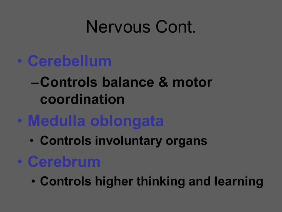Nervous Cont. Cerebellum Medulla oblongata Cerebrum