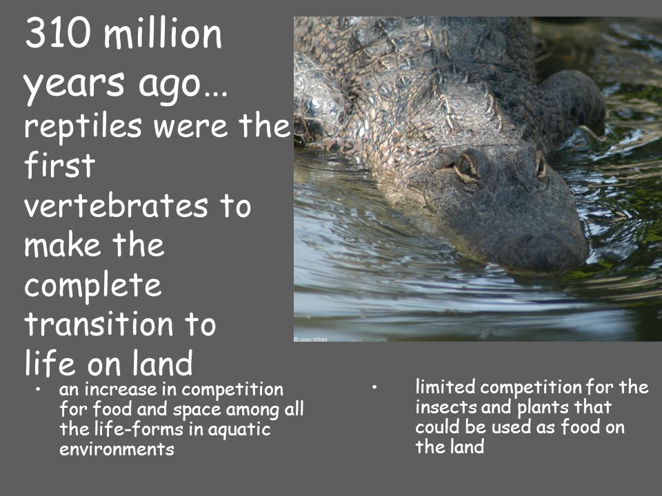 310 million years ago… reptiles were the first vertebrates to make the complete transition to life on land