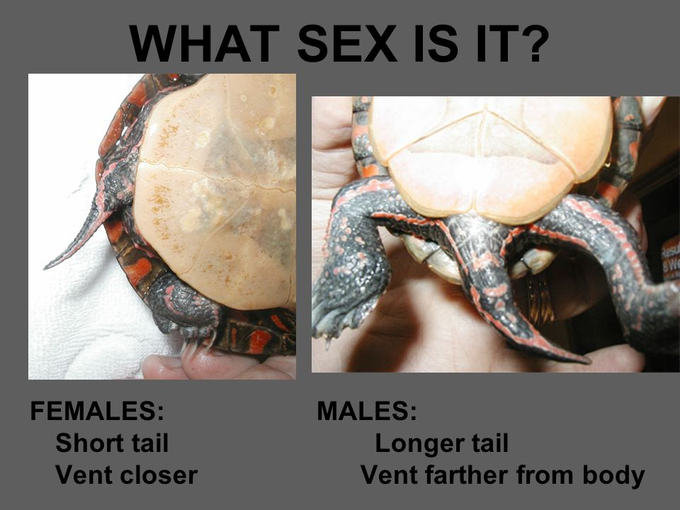 WHAT SEX IS IT.